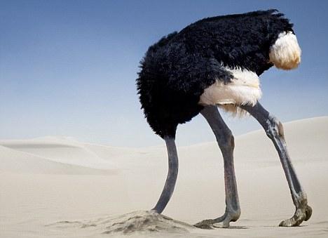 ostrich_sand